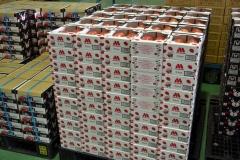 101-3モスブラントのトマトを全国へ出荷